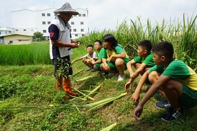 中市深耕食農教育 外埔區小學結合花博元素推廣